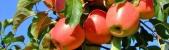 Logo firmy: Ing. Jaroslav Nevole - pěstování ovoce